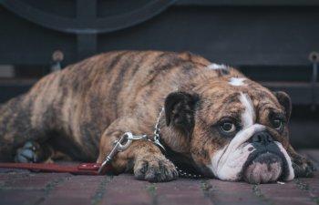 10+ imagini cu animale in fata carora nu poti ramane indiferent