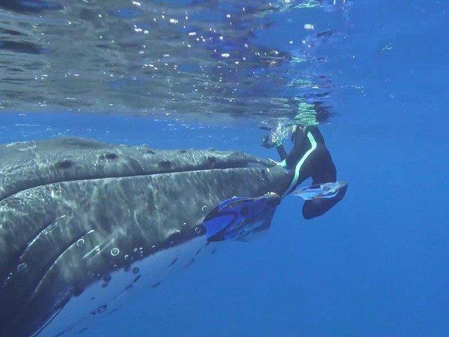 [VIDEO] Momentul uimitor in care o balena salveaza un scafandru de atacul unui rechin