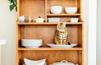 10+ pisici care s-au asezat... in cele mai nepotrivite locuri