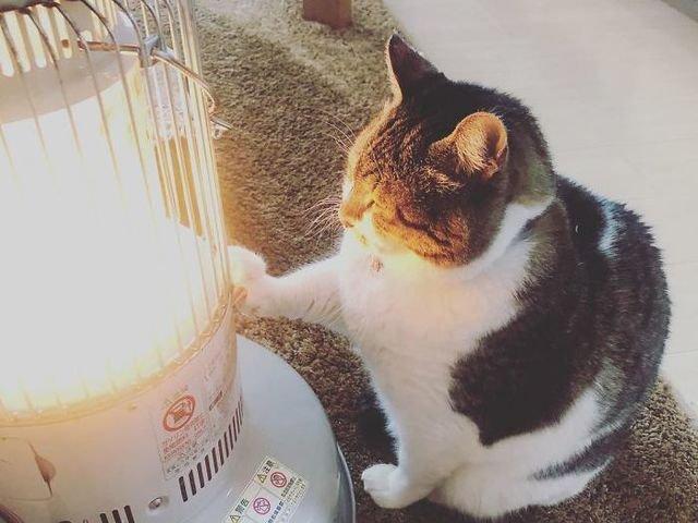 [FOTO] Cea mai simpatica pisicuta: s-a indragostit de un... radiator