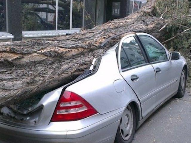 Un roman a murit in Malta dupa ce un copac a cazut pe masina sa, in timpul unei furtuni