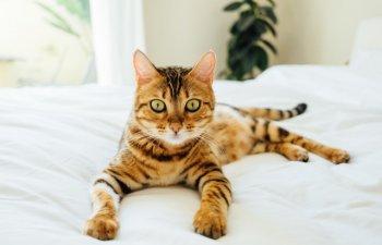 Cateodata stau la poza! 15+ fotografii care demonstreaza cat de fotogenice sunt pisicile