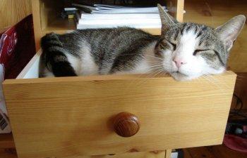 Nu te plictisesti privindu-le! 10+ fotografii cu pisici dormind in cele mai bizare locuri