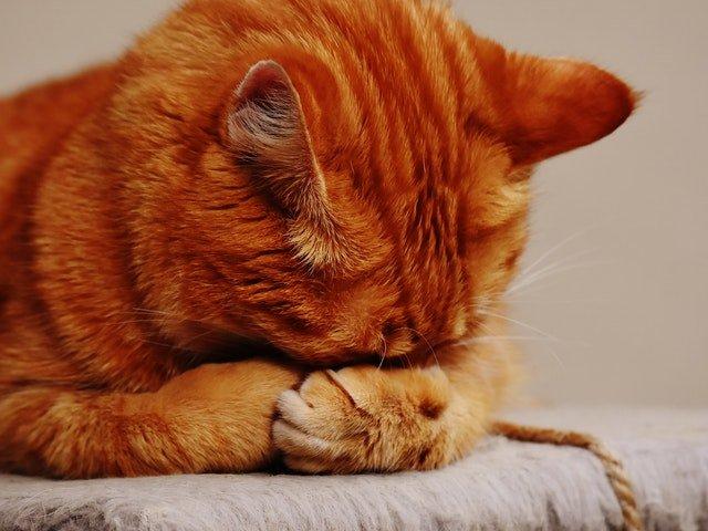 [VIDEO] Si-a inscenat moartea pentru a testa reactia pisicii. Ce s-a intamplat