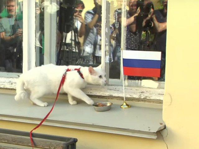 """Pisica fara auz, desemnata """"prezicatorul oficial"""" al Campionatului de Fotbal din 2018/ VIDEO"""