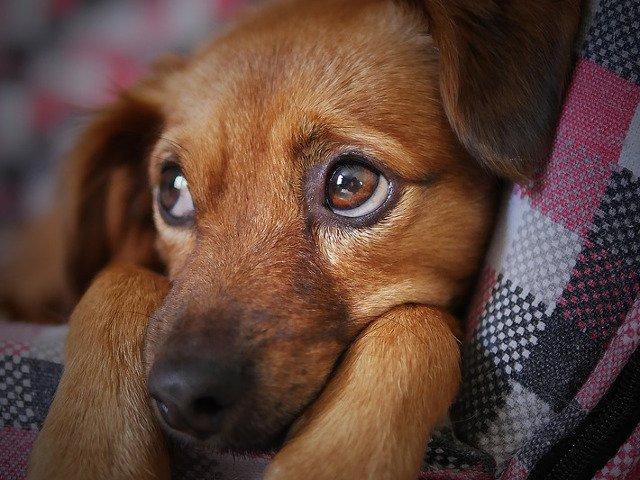 Dragnea este de acord cu inasprirea pedepselor pentru persoanele care schingiuiesc animalele