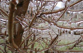 De vis sau de cosmar? 10+ imagini impresionante dupa ploi inghetate