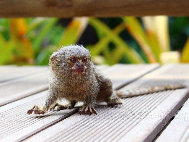 Simpatice si pline de viata! 10+ cele mai mici animale din lume