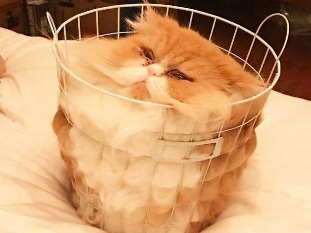 10 dovezi  imbatabile ca pisicile pot lua ORICE forma