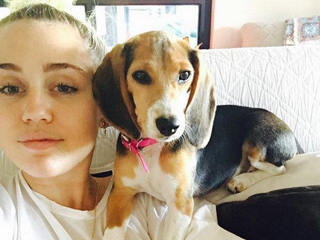 Si Miley Cyrus are unul! 10+ imagini care te vor face sa iti doresti un Beagle