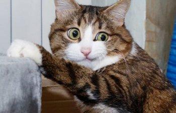 O pisica sfideaza normele frumusetii in ciuda handicapului de care sufera