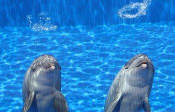 Sunt printre cele mai inteligente animale din lume. 10 lucruri mai putin stiute despre delfini