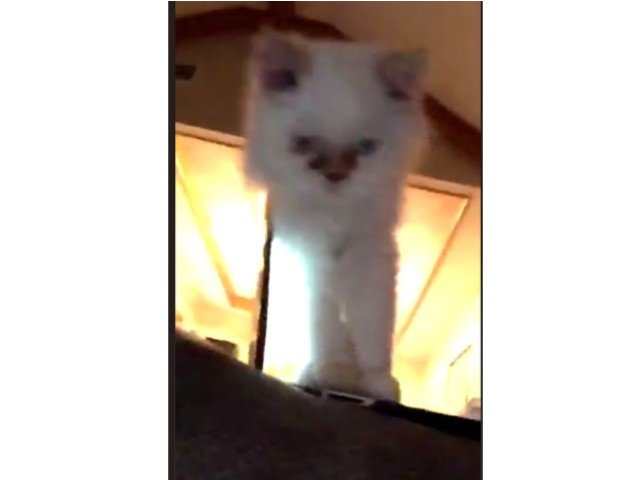 O pisica a devenit vedeta pe internet dupa ce aparut intr-un clip de trei secunde / VIDEO