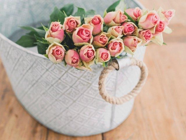Secretele ADN-ului trandafirilor, descifrate de oamenii de stiinta
