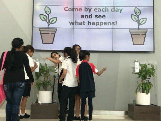 Experiment IKEA: cum arata doua plante care au primit tratament diferit de la oameni
