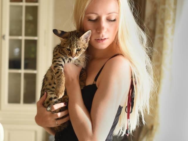 Top 10 cele mai scumpe rase de pisici din lume