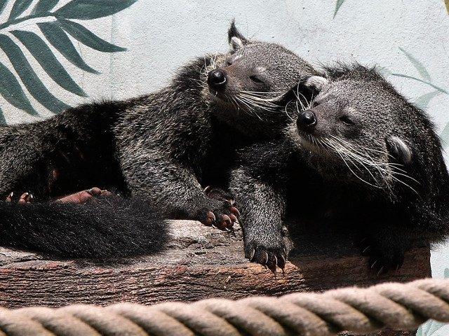 10+ animale mai putin cunoscute care te vor cuceri cu dragalasenia lor