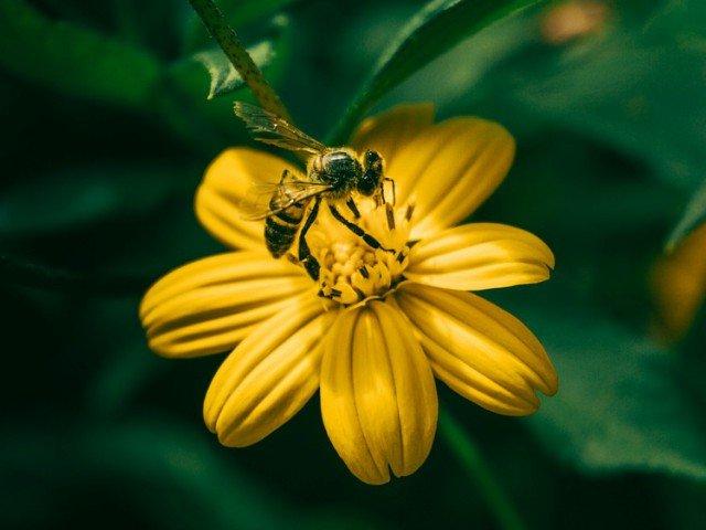Diferente dintre albine si viespi: 6 detalii importante