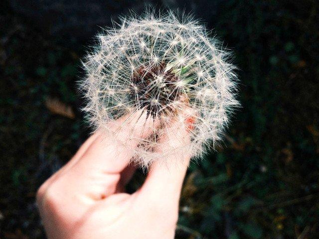 10 remedii naturale care te scapa de alergii