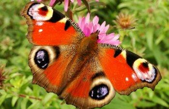 13 cele mai rare si fascinante specii de fluturi din lume