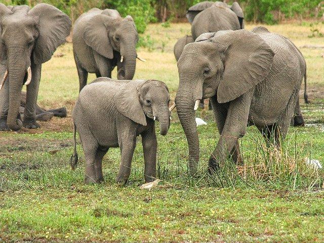 Un elefant salbatic a ucis un barbat care dormea in fata casei sale