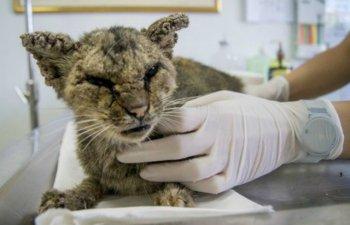 Grav bolnava si fara prea mari sanse de supravietuire, o pisica s-a transformat complet dupa ce a intrat pe mainile veterinarilor. Cum arata acum
