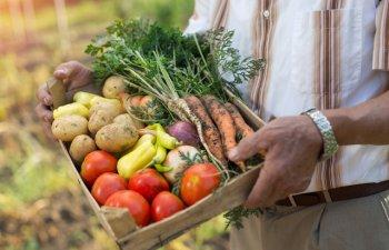 Top 4 legume din bucataria romaneasca: ce trebuie sa stii ca sa le cultivi in propria gradina