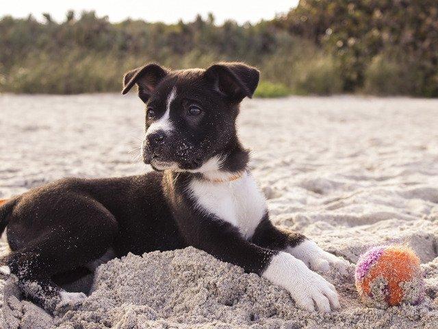 15+ imagini care demonstreaza ca animalele de companie iubesc plaja mai mult decat stapanii