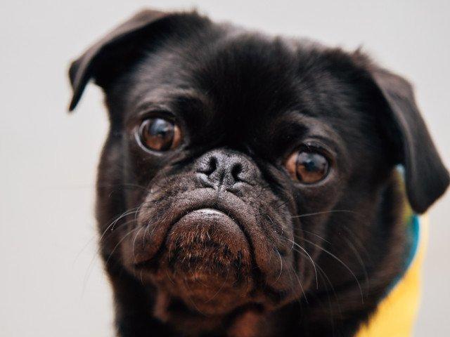 """Expresivitate """"la superlativ""""! 15+ imagini cu animale care nu-si pot ascunde emotiile"""