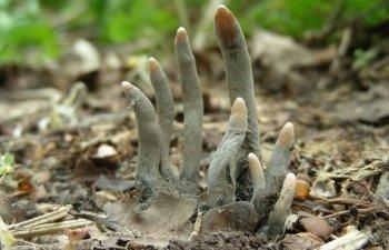 10+ imagini care demonstreaza ca natura poate fi cu adevarat infricosatoare si periculoasa
