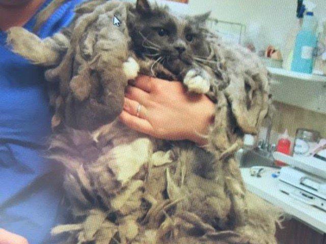 Transformarea uimitoare a unei pisici abandonate la un centru de animale