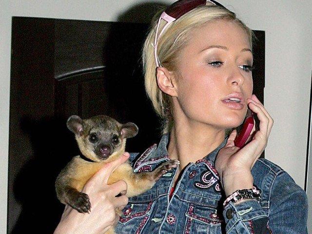 Vedetele si alegerile lor excentrice: 10+ cele mai neobisnuite animale de companie ale celebritatilor