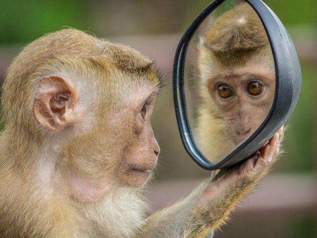 10+ reactii adorabile ale animalelor cand se vad pentru prima data in oglinda/ VIDEO