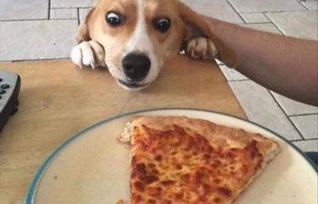 10+ imagini cu animale surprinse in cele mai amuzante ipostaze