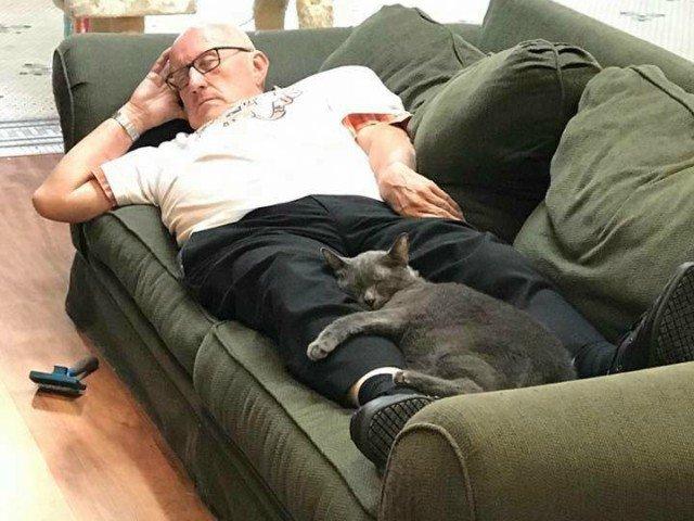 Un batran viziteaza adapostul unor pisici: imagini induiosatoare cu acesta si felinele
