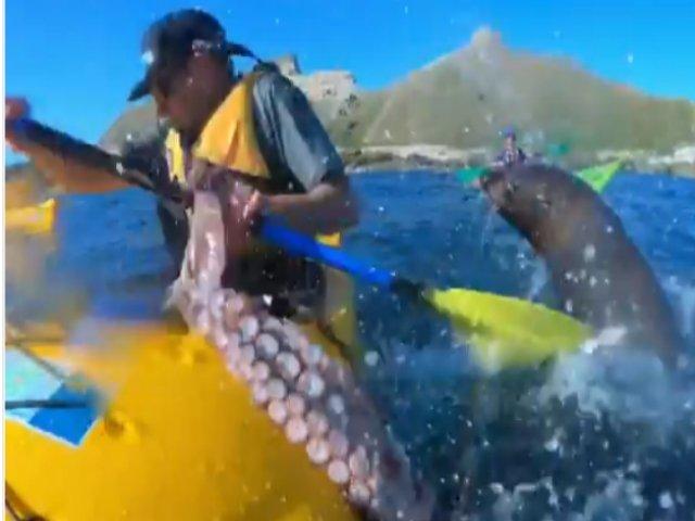 Momentul amuzant in care o foca arunca cu o caracatita spre un barbat / VIDEO