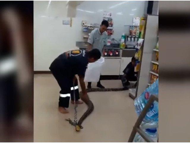 Un piton de 4 metri a fost gasit dormind intr-un magazin din Thailanda / VIDEO