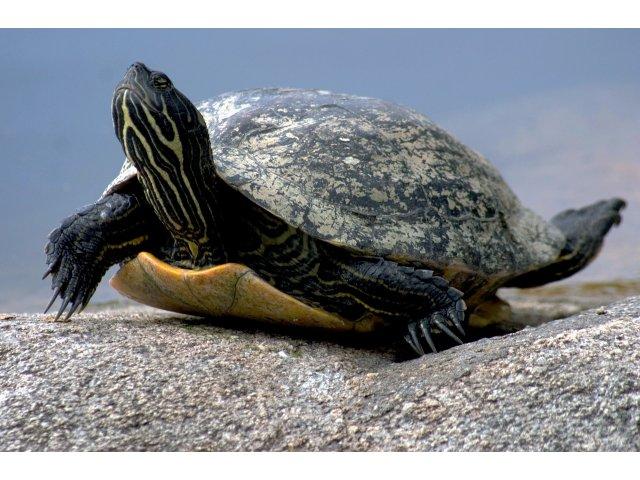 123 de testoase uriase au fost furate de la un centru din Insulele Galapagos