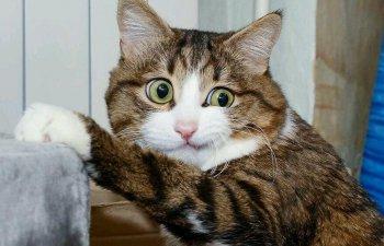 10+ imagini cu animale care nu au nicio problema in a-si arata emotiile