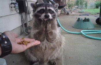 15+ imagini cu animale surprinse in cele mai neasteptate momente