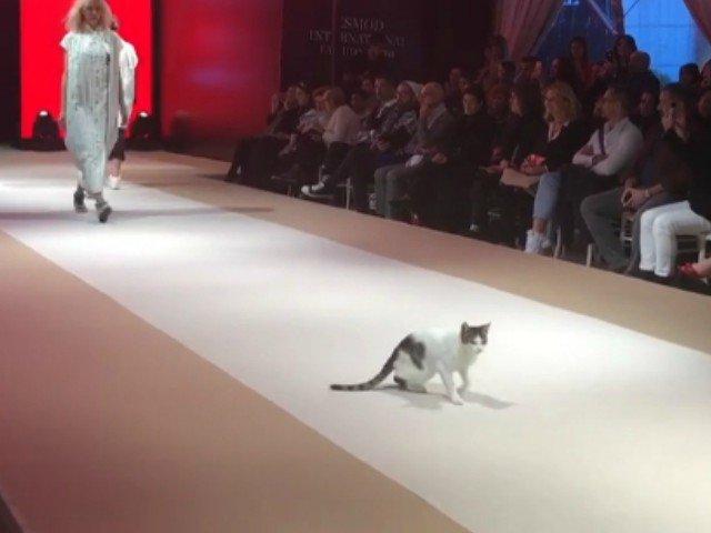 O pisica a atras toate privirile dupa ce a aparut neinvitata pe un podium de defilare / VIDEO