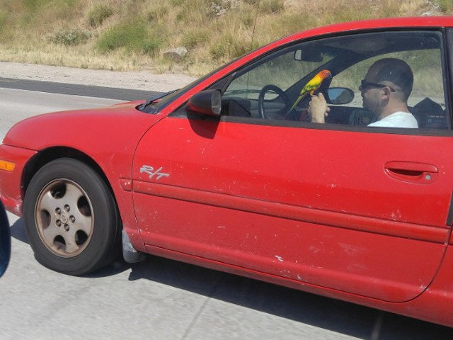 Imagini din trafic: 10 soferi inconstienti care nu ar fi trebuit sa obtina permisul de conducere