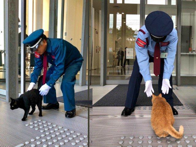 Doua pisici incearca de doi ani sa intre intr-un muzeu de arta din Japonia / VIDEO