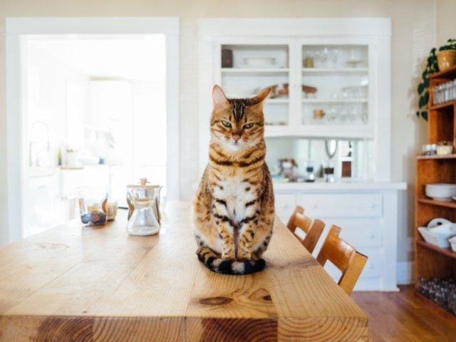Sindromul balonului sau sindromul cozii moi: ce afectiuni bizare pot afecta animalele