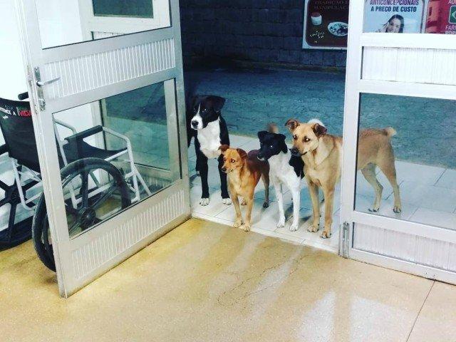 Imaginea impresionanta in care patru caini isi asteapta stapanul sa iasa din spital