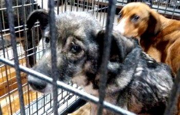 Un barbat din Brasov este acuzat ca a lasat 70 de caini si pisici sa moara de foame / VIDEO
