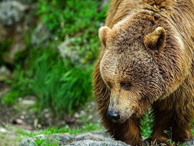 Un copil de 3 ani care a stat doua nopti in padure spune ca un urs a avut grija de el