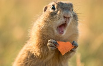 Adorabile si pline de energie: 15 animale haioase, surprinse in momente nostime