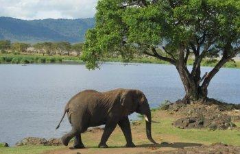 10+ animale pe cale de disparitie: ce specii risca sa nu mai existe pe Pamant in viitorul apropriat