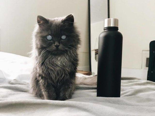 O pisica oarba face senzatie pe internet prin infatisarea sa aparte